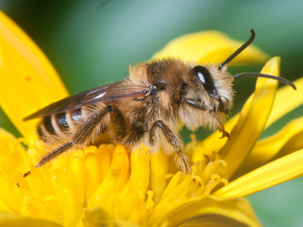 bee pic