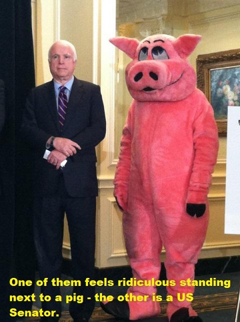 McCain & pig