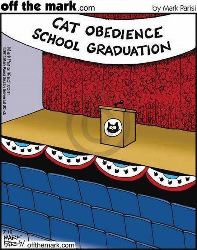 cat obedience school grad
