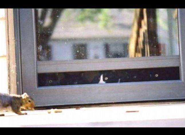 cats in sneak mode