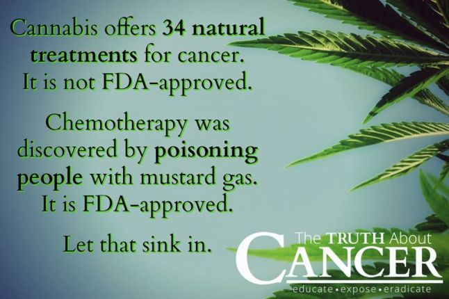 chemotherapy vs cannibis