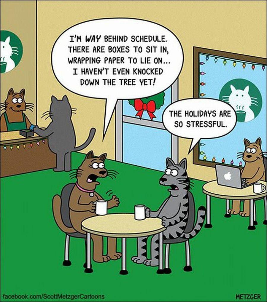 cats-holiday-stress